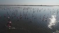 ORMAN VE SU İŞLERİ BAKANLIĞI - Çukurova Deltası Flamingolarla Renklendi
