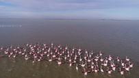 ORMAN VE SU İŞLERİ BAKANLIĞI - Göçmen Kuşların Kışlık Mekanı Çukurova Deltası Flamingolarla Renklendi