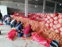 BAKANLIK - Soğanı fiyat artırmak için depoya hapsettiler