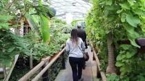ÇIÇEKLI - Kelebek Bahçesi'ndeki Bitkilere Bebek Gibi Bakılıyor