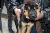 ÇARDAKLı - Ölmek Üzere Olan Köpek Vatandaşların Duyarlılığı Sayesinde Kurtarıldı