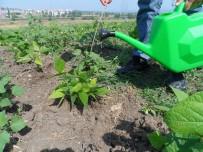 ORGANIK TARıM - (Özel) Organik Tarıma 'Üniversiteli Solucan' Desteği
