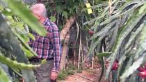 Türkiye'nin İlk Tropikal Meyvesine Tescil