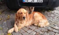 Köpek İle Kedinin Kıskandıran Dostluğu