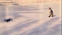 KARAHAYıT - Meraklı Kedi Drone'nin Peşini Bırakmadı
