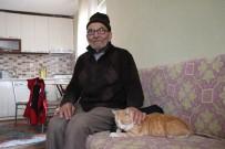 Ali Dede Yeni Evinde Kedileriye Birlikte Yaşıyor