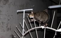 ISPARTA BELEDİYESİ - Balkon Korkuluklarına Saplanan Kediyi İtfaiye Kurtardı