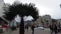 LODOS - Bursa'da Lodos Hayatı Felç Etti