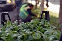 SEYRANTEPE - Büyükşehir Belediyesi 2 Milyon Kışlık Çiçek Dikecek