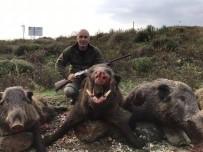 OCAKLAR - Erdekli Avcılar Dev Domuzları Avladı