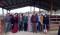Genç Çiftçilere 100 Baş Manda Teslim Edildi