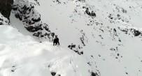 Karla Kaplı Dağda Çengel Boynuzlu Dağ Keçisinin Drone İle İmtihanı
