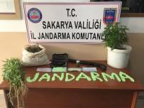 ŞAFAK OPERASYONU - Sakarya'da Uyuşturucu Operasyonu Açıklaması 3 Gözaltı
