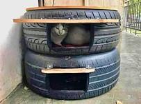 'Sokaktaki Kediler Üşümesin' Diye Lastikten Kedi Evi