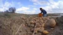 Afyonkarahisar Patates Üretiminde 3. Sırada