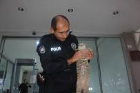 POLİS KARAKOLU - Ameliyatlı Halde Sığındığı Karakolun Maskotu Oldu