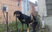 İTFAİYE MÜDÜRÜ - Bacağına Demir Saplanan Köpeğin Yardımına İtfaiye Yetişti