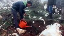 HAYIRSEVER İŞ ADAMI - Hatay'daki Kel Dağı Yeşerecek