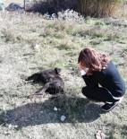 Ağılına Girip Kuzularına Zarar Verdiğini İddia Ettiği Köpeği Öldürdü