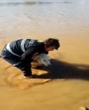 Cizre'de Nehirde Mahsur Kalan Köpeği İtfaiye Ekipleri Kurtardı
