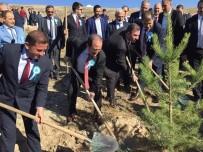 ALİ HAMZA PEHLİVAN - Demirözü Barajı Etrafında Ağaç Dikim Seferberliği