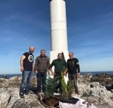 Fatsa Fener Adası'na Fidan Diktiler