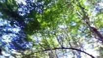 Longoz Ormanlarında Sonbahar Güzelliği