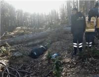 Odun Kesmek İçin Gittiği Ormanda Kalbine Yenik Düştü