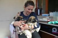 YAVRU KÖPEK - Sokakta Bulduğu Yavru Köpekleri Evinde Biberonla Besliyor