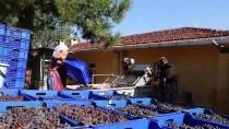 KATKI MADDESİ - Üzümün 'Bağdan Şıraya' Lezzetli Yolculuğu