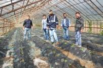 ATATÜRK EVİ - Mersin'de Dolu Cam Seraları Yerle Bir Etti