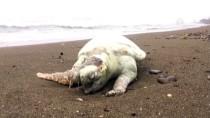 ÖLÜ DENİZ - Ölü Deniz Kaplumbağası Kıyıya Vurdu