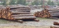 YAĞCıLAR - Ormanların Emanet Edildiği Memurlar, Kaçak Kesilen 2 Kamyon Tomrukla Yakalandı