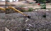FIRAT NEHRİ - Binlerce Ton Balık Telef Oldu