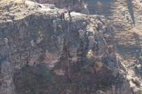 MAHSUR KALDI - Bolu'da Bir Haftadır Kayalıklarda Mahsur Kalan Keçiler Kurtarıldı