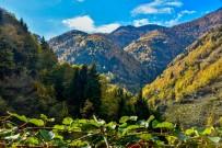 YEŞILKÖY - Boyları 70 Metreye Ulaşan Ağaçlar Var
