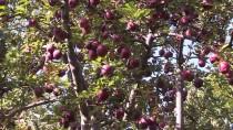 ORGANİK MEYVE - Fransa Ve İspanya'daki Bebeklerin Meyve Püresi Erzincan'dan