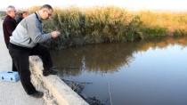 Gediz Nehri'ndeki Toplu Balık Ölümleri