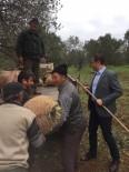 AHMET AKıN - Akın Açıklaması'zeytin Üreticisi Devletten Destek Bekliyor'