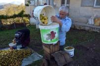 Emekli Öğretmen Köyündeki Meyveleri Ekonomiye Kazandırdı