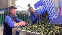 GIDA SEKTÖRÜ - İtalya'dan Zeytin Sıkma Makinesi İstedi, Gelmeyince Kendisi Üretti