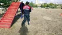 İSMAİL ARSLAN - Jandarmanın En Büyük Yardımcısı 'Hassas Burunlar'