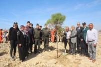 SÖZLEŞMELİ ER - Manavgat'ta Şehit Cumali Gür Hatıra Ormanı Oluşturuldu