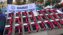 Orhangazi'de Festival Heyecanı Yaşandı