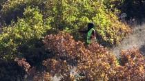 AKDAMAR ADASı - Ormanlar Kadın Eliyle Yeşeriyor