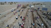 BEKİR ŞAHİN TÜTÜNCÜ - 'Fidanlar, Fidanlarla Büyüyor' Projesi İle Bin Fidan Toprakla Buluştu