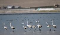 ERÇEK GÖLÜ - Flamingolar Arin Gölü'nü Mesken Tuttu