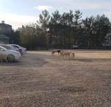 ÇOCUK HASTANESİ - Hastane Otoparkında Başıboş Köpek Paniği