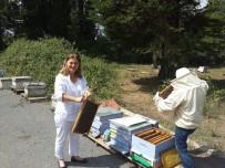 POTASYUM - Prof. Dr. Boyacıoğlu Açıklaması'balı Ham Haliyle Tüketin'