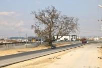 270 Yıllık Çınar Ağacı İçin Duble Yol Güzergahını Değiştirdiler